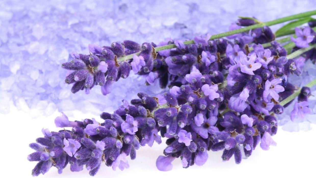 Lavanda, planta medicinal de propiedades calmantes - Hogarmania