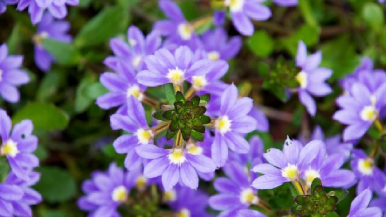 Plantas De Primavera Y Verano Para El Balcón O La Terraza Decogarden